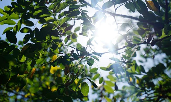 Solsken genom grönt lövverk